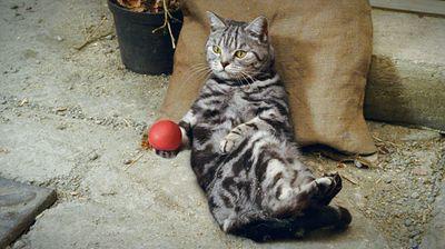 Bertrm thumbcat
