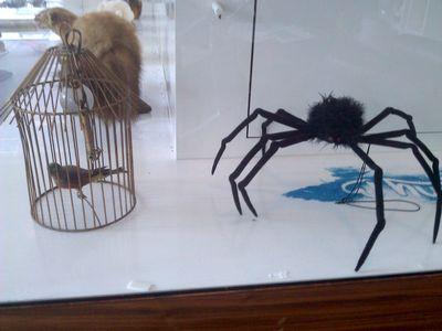 Bird and spider