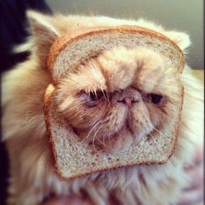 9460-bread-cat