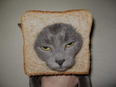 Bread-cat-07