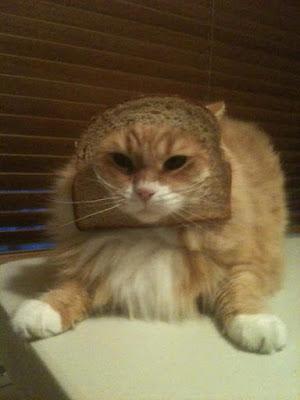 Bread-cat-08